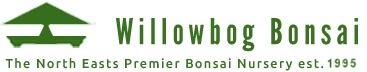 willowbog bonsai logo